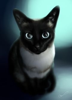 Фото Красивая сиамская кошка, by Martith (© Arinka jini), добавлено: 19.03.2017 03:03