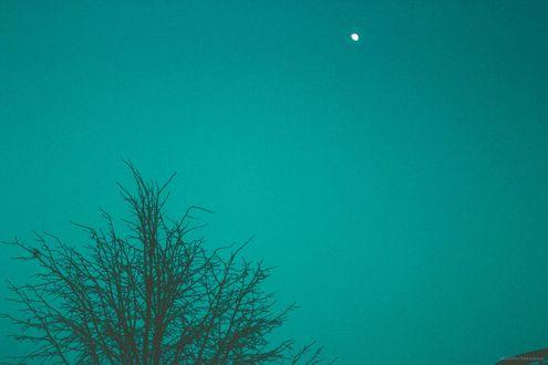 Фото На фоне бирюзового неба луна смотрит на дерево