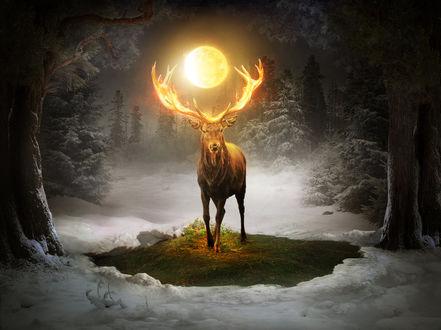 Фото Олень с огненным шаром над рогами, by ElenaDudina (© chucha), добавлено: 20.03.2017 07:06