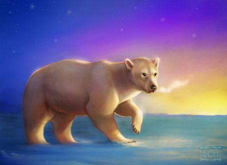 Фото Полярный, белый медведь, by Krrrokozjabrra