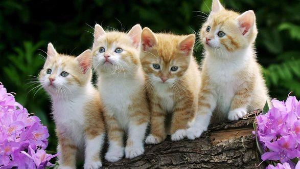 Фото Милые котята сидят на стволе дерева