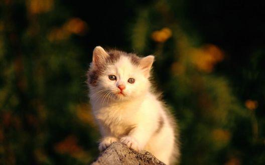 Фото Маленький милый пушистый котенок сидит на камне, на размытом фоне (© Margo Fly), добавлено: 20.03.2017 14:43