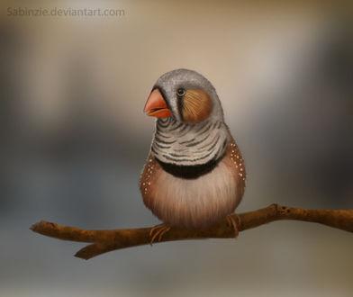 Фото Пестрая птица сидит на ветке, by Sabinzie (© Margo Fly), добавлено: 20.03.2017 15:52