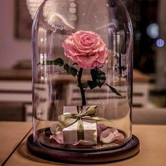 Фото В стеклянной капсуле находится роза и коробка с бантом (© a_m_i_na), добавлено: 20.03.2017 16:44