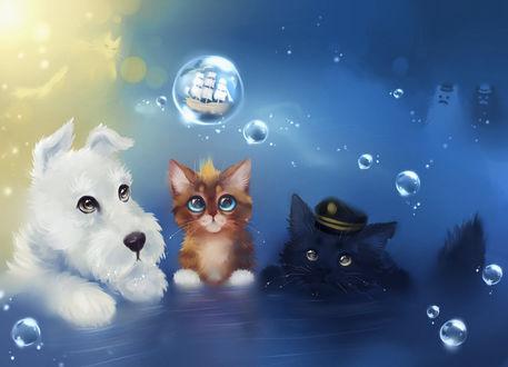 Фото Белый щенок, рыжий и черный котенок сидят в воде и смотрят на пузырь, внутри которого корабль с парусами