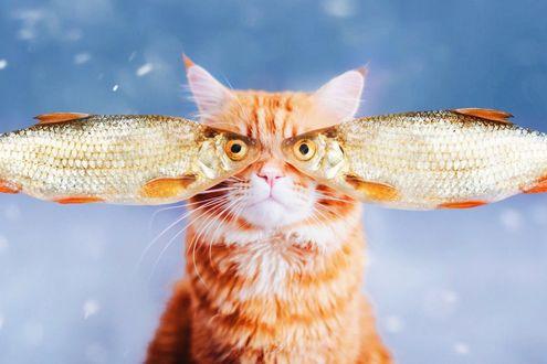 Фото Рыжий полосатый кот с глазами рыбы