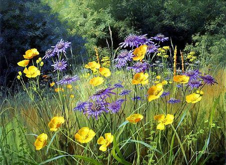 Фото Желтые лютики и сиреневые цветы в траве на фоне леса, by Mary Dipnall (© Margo Fly), добавлено: 20.03.2017 17:49