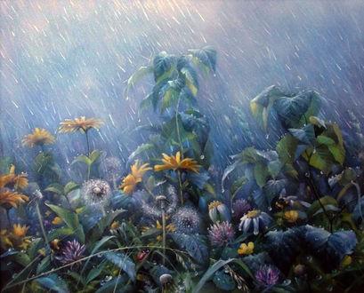 Фото Луговые цветы под дождем. Художник Александр Желонкин