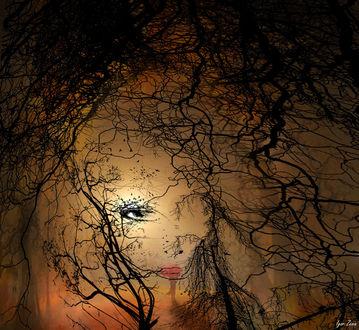 Фото Лицо девушки за деревьями, by Игорь Зенин
