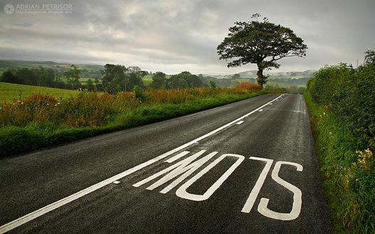 Фото Пустое шоссе на живописном фоне природы, by Adrian Petrisor