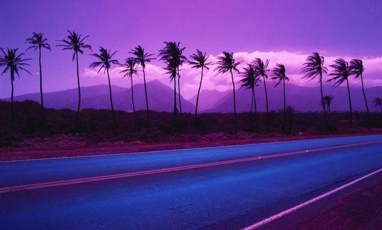 Фото Пальмы вдоль дороги