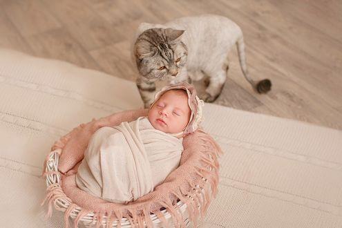 Фото Полосатый кот с кисточкой на хвосте охраняет сон охраняет сон новорожденной малышки спящей в корзинке. Фотограф Лилия Ульянова
