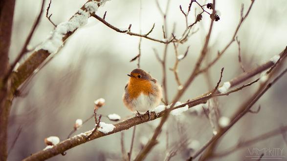 Фото Птичка сидит на ветке, by vampk1tty