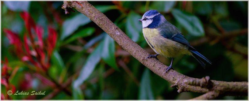 Фото Птица сидит на ветке дерева, by lukias-saikul