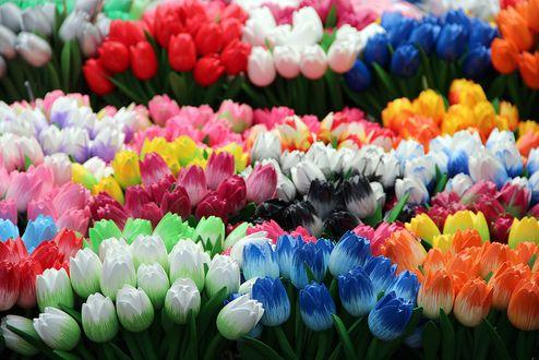 Фото Красивые разноцветные тюльпаны с листьями
