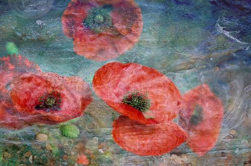 Фото Цветы красного мака в воде. Фотограф Таня Маркова