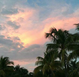 Фото Облака над пальмами