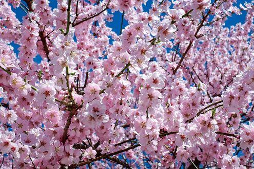 Фото Цветущие ветки дерева на фоне неба