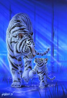 Фото Белый тигр с детенышем в воде. Художник Kentaro Nishino