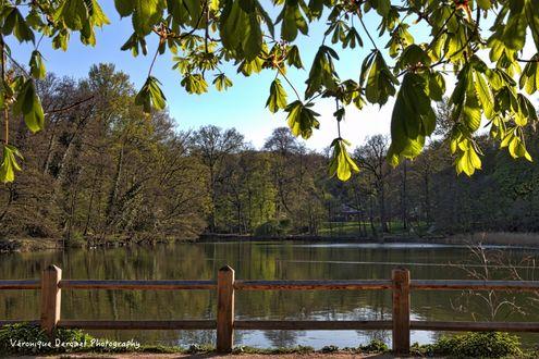 Фото Деревья у водоема, вдали за ними стоит дом, by Veronique Derouet