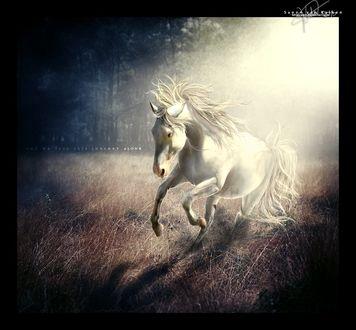 Фото Белый конь скачет по траве на фоне природы