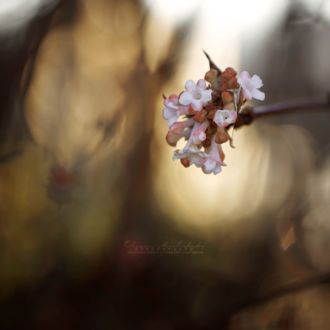 Фото Весенние цветы на ветке дерева, by OliviaMichalski
