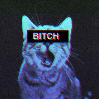 Фото Неоновый кот с закрытыми черной полоской с надписью BITCH глазами облизывается в темноте