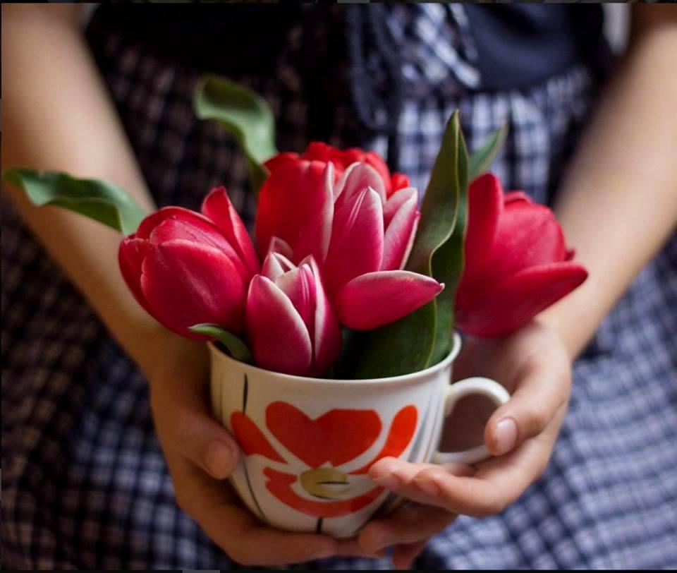 Фото Девушка держит чашку с розовыми тюльпанами