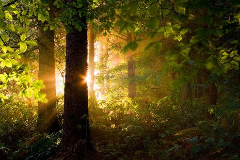 Фото Солнце освещает лес, by Jason Theaker