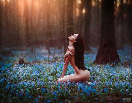 Фото Обнаженная девушка сидит на поляне весенних цветов, фотограф Светлана Беляева