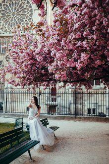 Фото Девушка сидит на лавочке под цветущим деревом, фотограф Jovana Rikalo