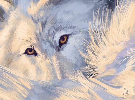 Фото Белый волк с карими глазами, by Wolf Minori