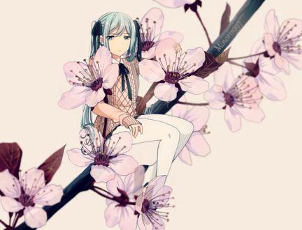 Фото Vocaloid Hatsune Miku / Вокалоид Хатсуне Мику сидит на цветущей ветке сакуры, by Minori1997