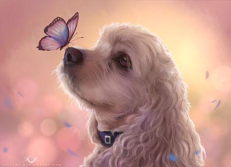 Фото Пес с бабочкой на носу, by Selven7