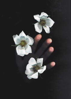 Фото Рука тянется к цветам