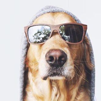 Фото Прикольный пес в очках и капюшоне
