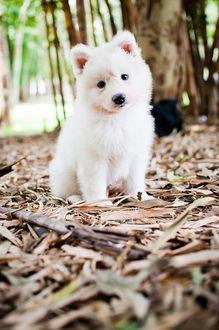 Фото Белый щенок сидит на сухих листьях и смотрит в объектив