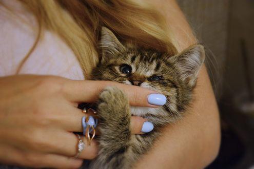 Фото В руках девушки котенок, by Маргарита Никки