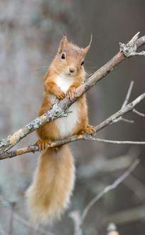Фото Милый бельчонок на ветке дерева