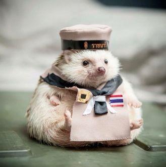 Фото Прикольный ежик в одежде моряка