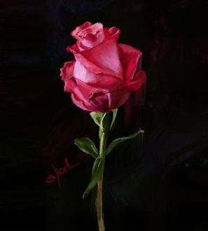 Фото Розовая роза на черном фоне, by abeer malik