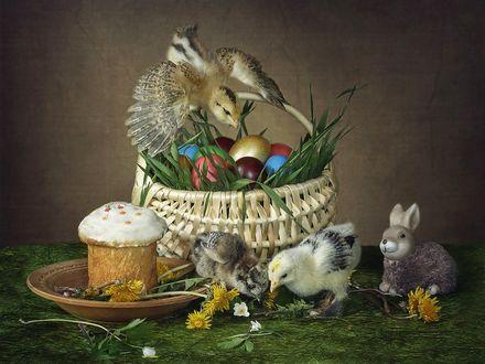 Фото Пасхальный натюрморт с цыплятами и игрушечным зайчиком, фотограф Ирина Приходько (© Elena1), добавлено: 20.04.2017 16:26