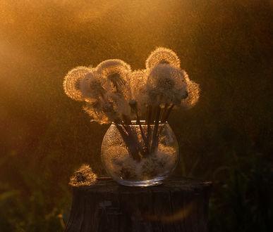 Фото Ваза на пеньке с отцветшими одуванчиками, фотограф Инна Сухова (© zmeiy), добавлено: 21.04.2017 09:58
