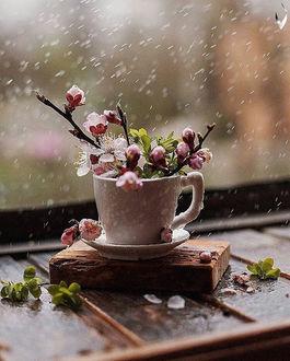Фото Чашка с весенними веточками под дождем