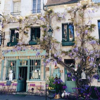 Фото Стена старого дома, увитая цветущими ветками красивого дерева
