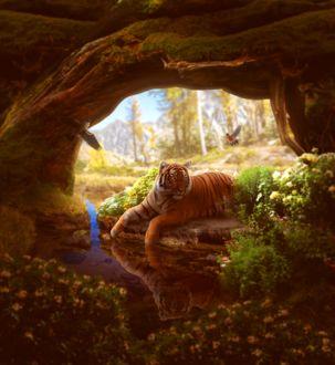 Фото Тигр лежит на камне у воды под корнями дерева, by FINTRON