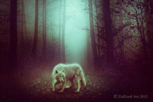Фото Белый волк в осеннем лесу, by ZedLord-Art