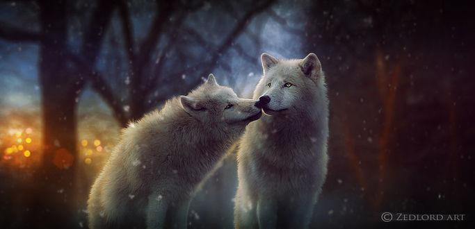 Фото Пара белых волков под первым снегом, by ZedLord-Art