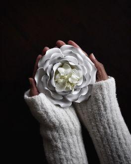 Фото В руке девушки белый цветок