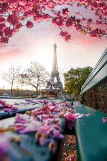 Фото Лепестки сакуры на лавочке, вид на Эйфелеву башню